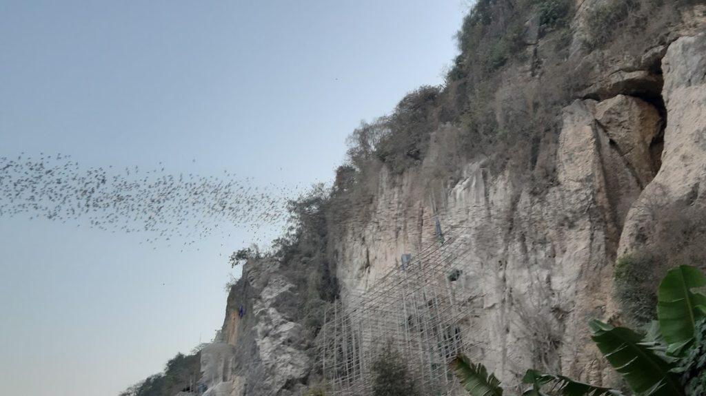 pipistrelli grotta Battambang Cambogia