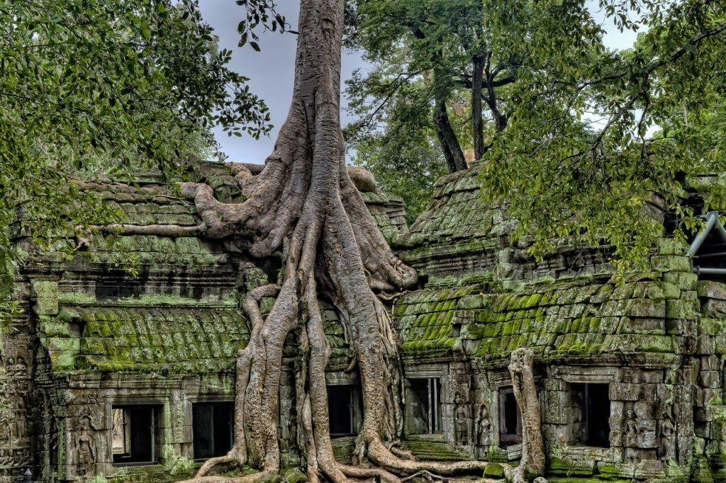 tempio Cambogia con radici film Tomb Raider